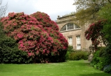 Flowering rhododendron trees with a glimpse of the mansion behind.