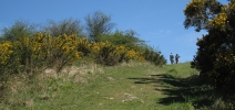 A typical pathway with gorse in bloom in May.